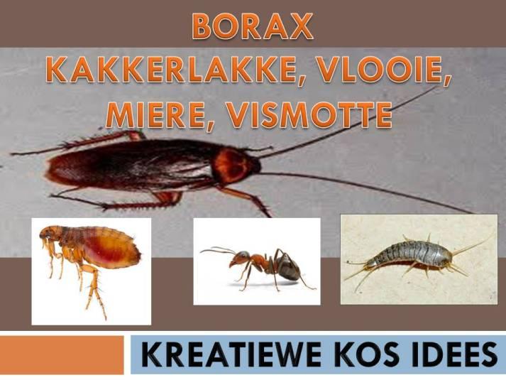 borax 21